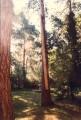 balkenimbaum